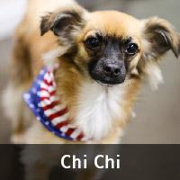 chi-chi_dog
