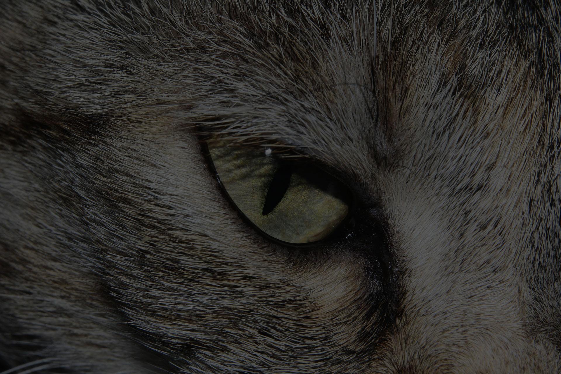closeup photo of cat eye